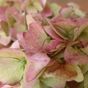 Dekoration - Herbstlich schön aus Naturmaterialien - DIY-Projekt