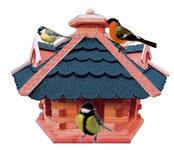Vögel im Garten Zoo Kellner