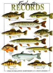 record de poisson de lac