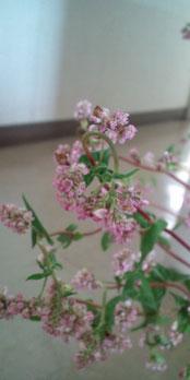 【赤いそばの花】