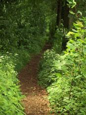 Sie oder Ihre Kinder möchten Wald mit allen Sinnen erleben?! Erlebnisse in der Natur machen Spaß und schaffen eine wichtige Bindung zur Umwelt. Abenteuerliche Exkursionen in Ahlen, Beckum, Sendenhorst, …