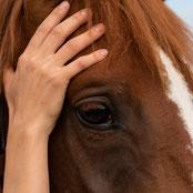 Osteopathie.für.Pferde.Baselland