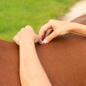 Osteopathie.für.Pferde.Baselland.Basel
