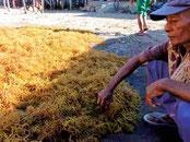 収穫・乾燥・保管指導