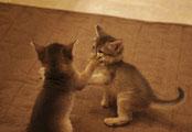 仔猫同士の社会性