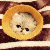 いろんな表情が可愛い猫