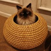 狭い丸い場所が猫は好き