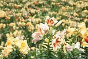 花の名所トップ