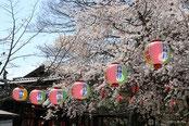 桜の名所(お花見)