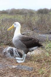 Galápagos Kreuzfahrten bieten das beste Tiererelebnis