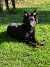 Chodkys-pes vom Damasplace
