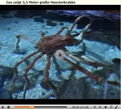 Crabzilla Video auf gmx.at