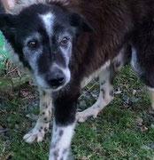 adoption chien de refuge - Bréhand - 22 - Bretagne