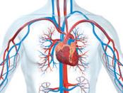 Système cardiovasculaire : les omega 3 pour l'optimisation du fonctionnement du cœur (SUPER Omega) omega 3