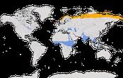 Karte zur Verbreitung des Temminckstrandläufers (Calidris temminckii)