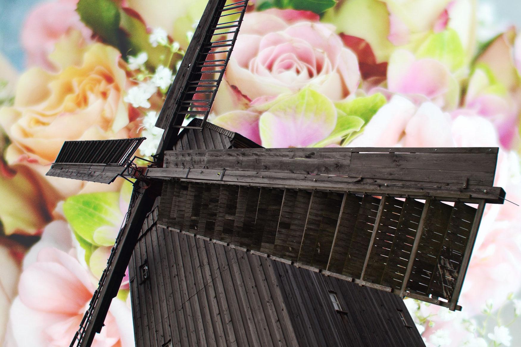 Beelitzer Bockwindmühle - Heiraten beim Bockwindmüller