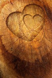 Mit Holz aus Liebe zur Natur.
