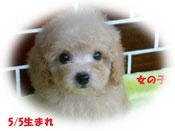 熊本県のS様宅に迎えて頂きました