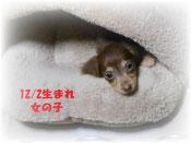 福岡県のS様宅に迎えて頂きました