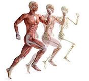 L'ostéopathe pour le soin des sportifs, course à pied, footing, entrainement, vélo, endurance - Cabinet d'ostéopathie Solène Marvyle - Pornichet - Saint-Lyphard