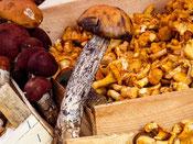 presentation de champignons dans une cagette de bois pour vous présenter la foire aux champignons organisée par le village saint bonnet le froid par le gite de la gorre à louer en ardéche