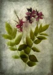 Dernières fleurs de la saison