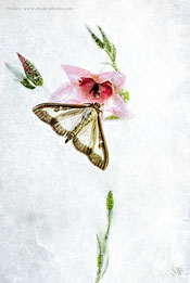 ice frost butterfly flower composition