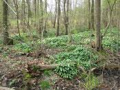 Terrestrisch bos