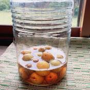 梅の柿酢漬け
