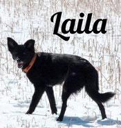 Laila hat ihre eigene Web-Seite!