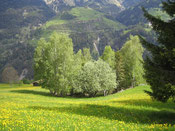 Jahreszeiten rund um Tschiertschen/Praden