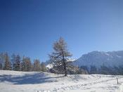 weisse Winterwelt