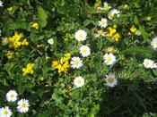 Flora in Graubünden - CH