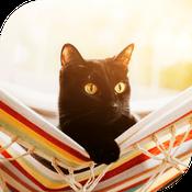 photo gros plan chat noir avec yeux grands ouverts dans hamac coloré