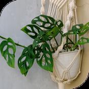 Suspension macramé avec plante verte vue de profil