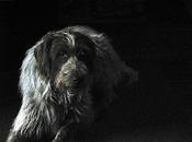 L'orientation du chien