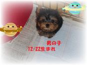 福岡県のY様宅に迎えて頂きました