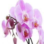 Какие домашние растения помогут избавиться от одиночества?