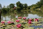 Bassin et fleurs de nénuphars