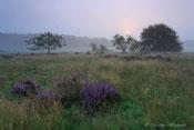 Heidegebiet