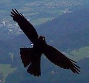 lebeinfreiheit.de- Vogel- Seminar Hamburg Heiler Energiearbeit ganzheitliche Beratung spirituelle Heilung Transformation Persönlichkeitsentwicklung bedingungslose Liebe ganzheitliches Coaching Bewusstseinserweiterung