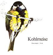 BiHU Vogelführer Natur Hergenrath Völkersberg Kohlmeise