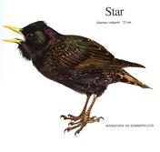 BiHU Vogelführer Natur Hergenrath Völkersberg Star