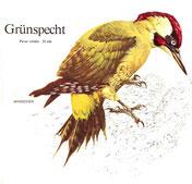 BiHU Vogelführer Natur Hergenrath Völkersberg Grünspecht