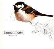 BiHU Vogelführer Natur Hergenrath Tannenmeise