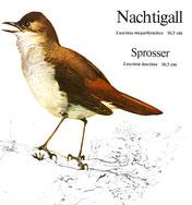 BiHU Vogelführer Natur Hergenrath Nachtigall