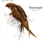 BiHU Vogelführer Natur Hergenrath Völkersberg Mauersegler