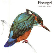 BiHU Vogelführer Natur Hergenrath Völkersberg Eisvogel