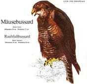 BiHU Vogelführer Natur Hergenrath Völkersberg Mäussebussard
