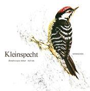 BiHU Vogelführer Natur Hergenrath Völkersberg Kleinspecht